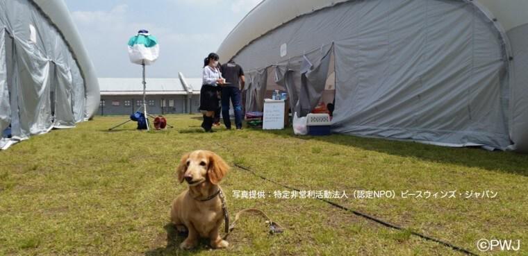 熊本地震に学ぶ、ペットの同行避難対策 災害が起こる前の備えを