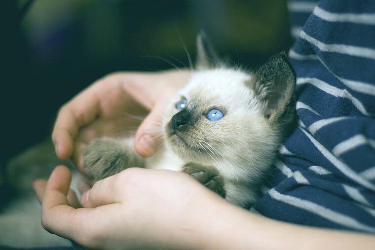 【専門医が解説】猫の呼吸が速い・息が荒い場合に考えられる病気と対処法