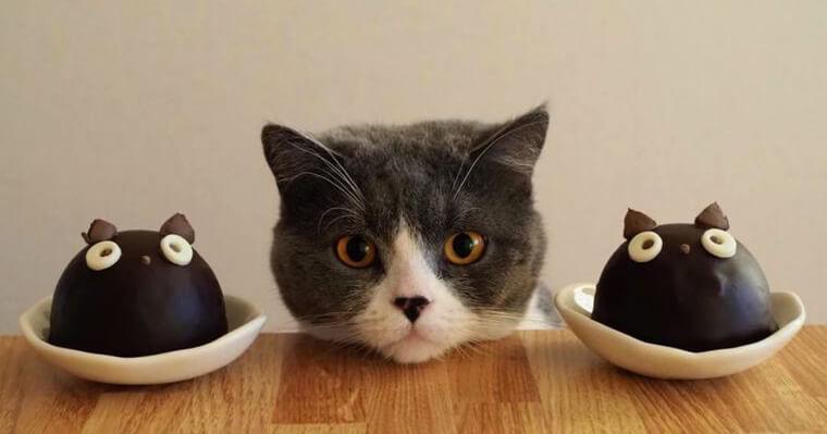 【2018年版】猫好きのバレンタインチョコならコレ! ゴンチャロフ・モロゾフなど人気ブランドを紹介