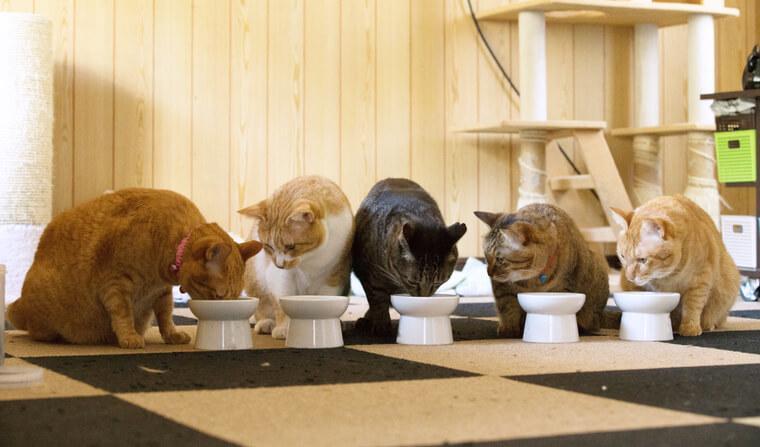 猫の食欲不振を獣医師が解説 対処法や病院に行くべきかの判断基準・よくある誤解