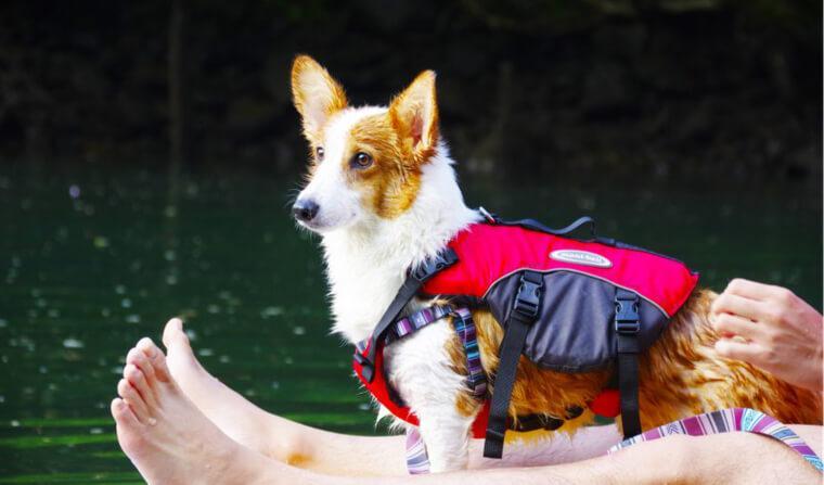 平成最後の夏休みは那須に。愛犬コルクと大自然を満喫して思い出づくり♪