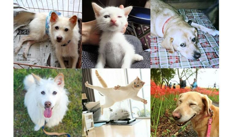 踊るネコちゃん/お出かけ大好きワンちゃん 保護犬猫を迎えた家族たちの話