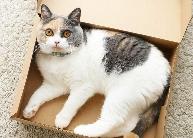 猫用ダンボールおすすめ10選|可愛いボックス型やおしゃれな爪とぎ付きなど