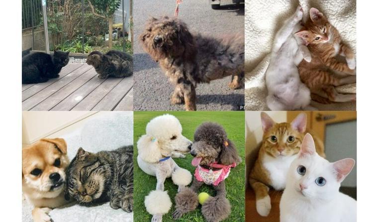 旅する兄妹犬/人が大好きな元野良猫 保護犬猫を迎えた家族たちの話