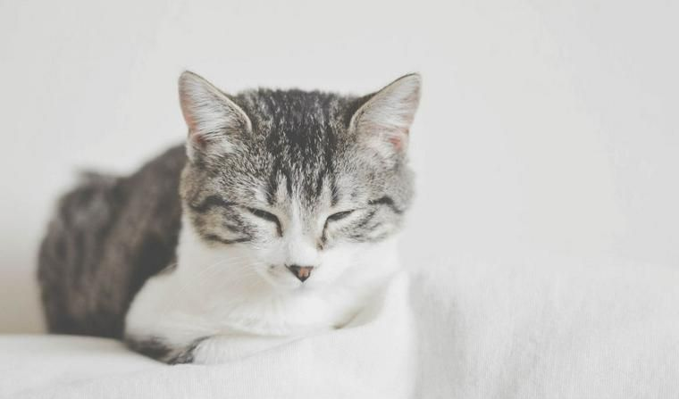 猫の鼻血は命に関わる場合も! 獣医師が考えられる原因や治療法を解説