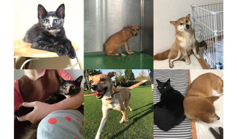 宮古島から来た元野犬/保護犬カフェ出身の柴犬 保護犬猫を迎えた家族たちの話