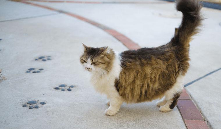 猫のお腹が膨れるときは重大な病気の可能性も 原因や治療法を獣医師が解説