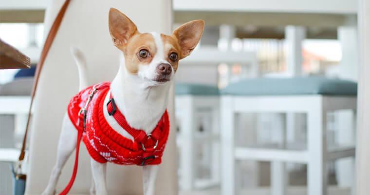 犬のセーター(ニット)おすすめ9選 手作り本から機能性の高いおしゃれブランドまで紹介