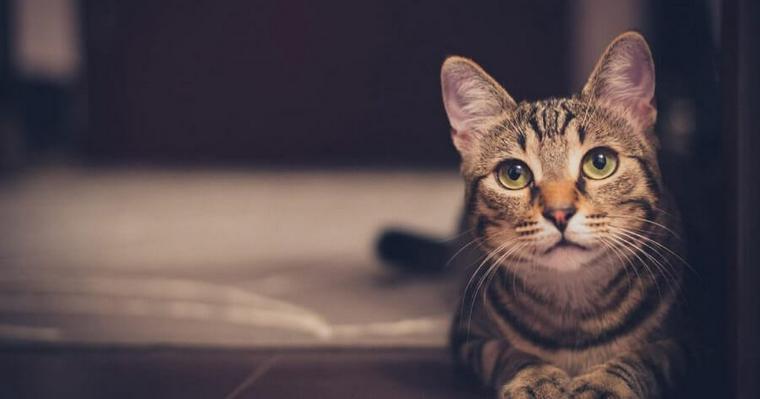 猫も「だるまさんが転んだ」ができる!? やる理由・やり方を解説