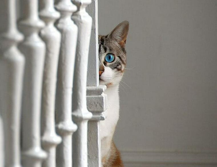 猫の体のどこからか出血している場合に考えられる原因と病気