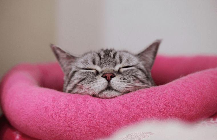 猫の鼻づまりは病気のサイン? 考えられる原因や治療法を獣医師が解説