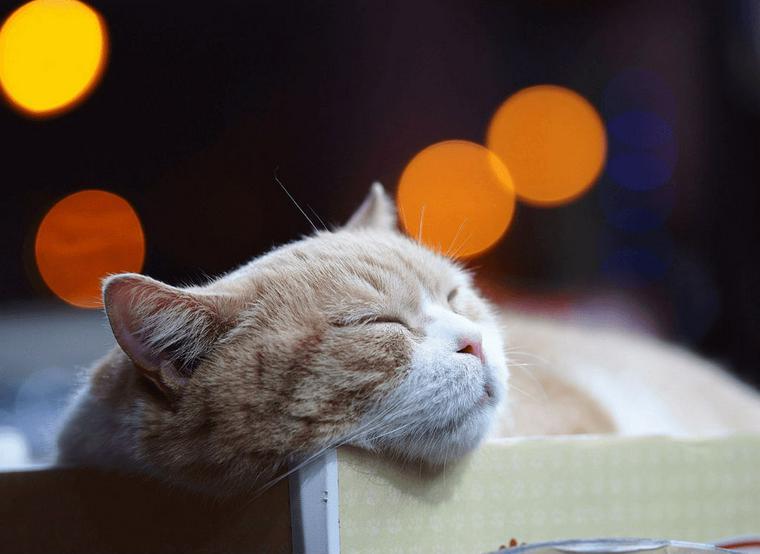 猫の顔が腫れている場合に考えられる症状や原因 | 応急処置や予防ケアも
