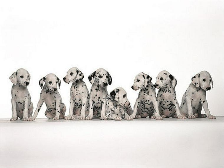 あなたの愛犬の国籍は? イギリスやドイツなどヨーロッパ原産の犬種を紹介