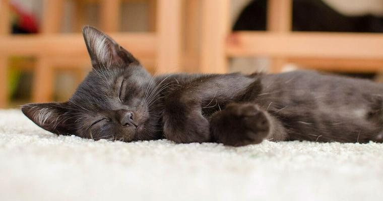 黒猫グッズおすすめ12選|おしゃれなインテリア雑貨やキッチン雑貨、ポーチなどを紹介