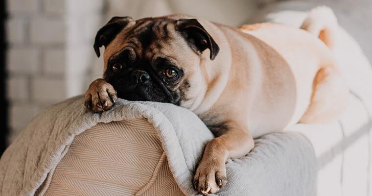 愛犬も虜に? 人気の知育玩具「コング」の正しい遊び方や洗い方を紹介します。