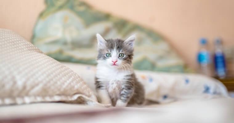猫パルボウイルス感染症(猫汎白血球減少症)|検査・治療、予防方法を獣医師が解説