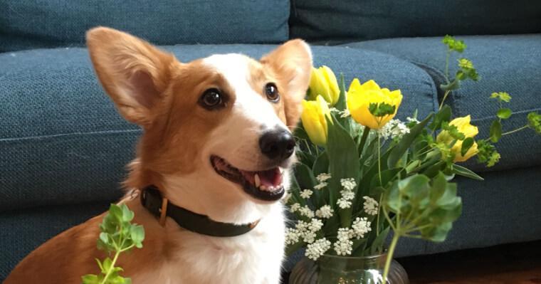 プロが教えるスマホ撮影術 「いつもの愛犬」にお花を添えて【犬の写真の撮り方】