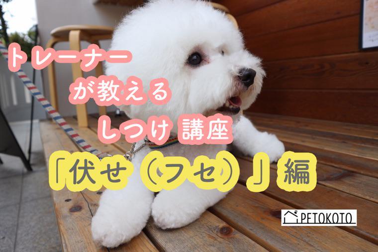 犬 命令 英語 伏せ