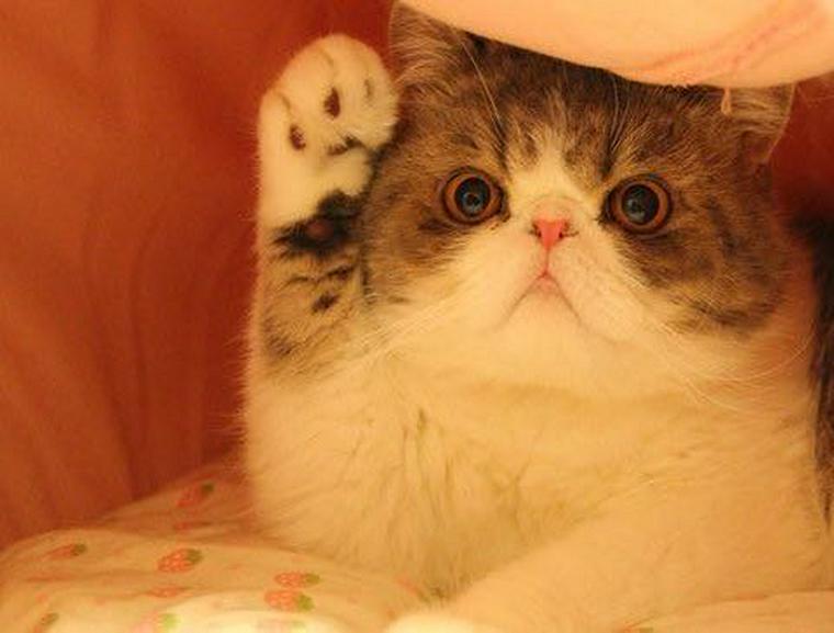 攻撃だけじゃなかった! 「猫パンチ」に隠された秘密