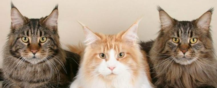 猫がよく首を振る場合に考えられる症状や原因 応急処置や予防ケアも【獣医師解説】