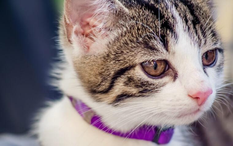 猫の目が腫れている場合に考えられる症状や原因|応急処置や予防ケアも