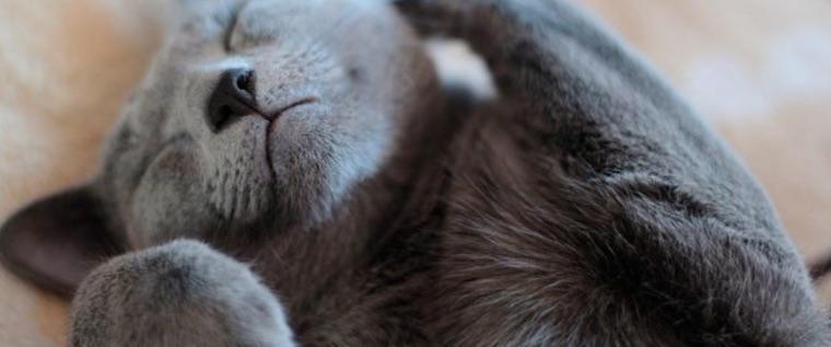 猫の尿から甘いにおいがしたら「糖尿病」かも? 考えられる原因