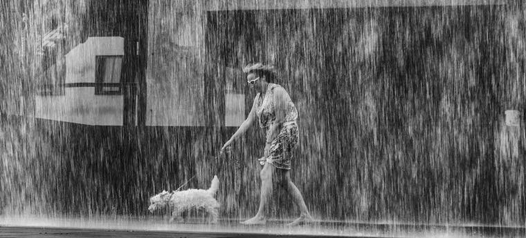 犬と雨の日散歩に行かない人は少数派? おすすめの過ごし方やグッズも