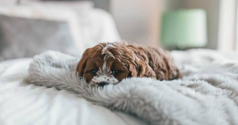 犬の冬用ベッドおすすめ9選 洗える素材から人気のドーム型、おしゃれなベッドもご紹介♪