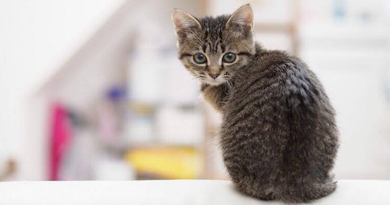 猫が痩せるのは病気のサイン? 原因と判断基準を獣医師が解説