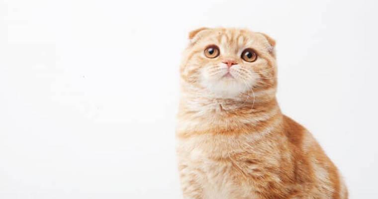 猫のフケ|原因と対策、病気の可能性について獣医師が解説