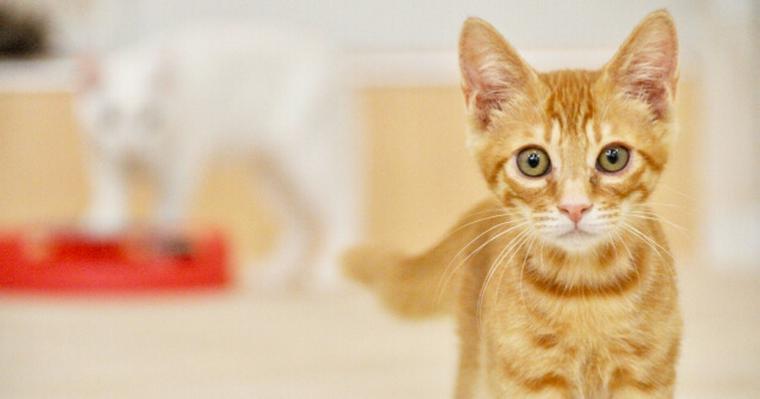 猫の発情期|行動診療科獣医師が性別による違いや対策を解説