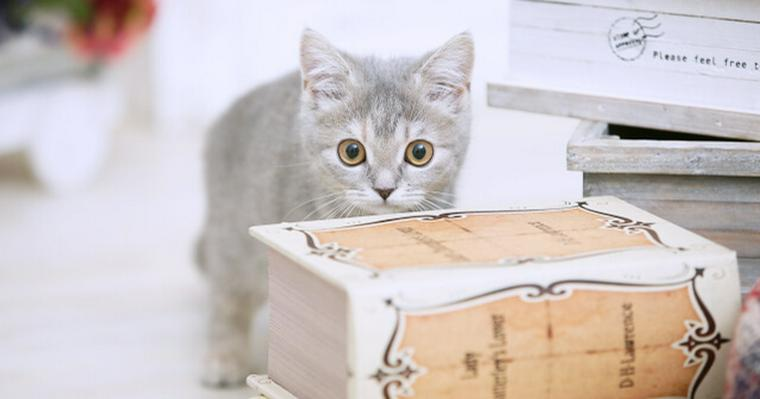 猫はティッシュが大好き! 散らかし対策や食べる危険性を解説