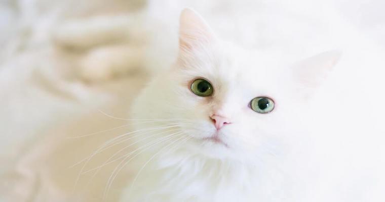 猫も健康診断は必要? 費用・検査項目などについて猫専門獣医師が解説