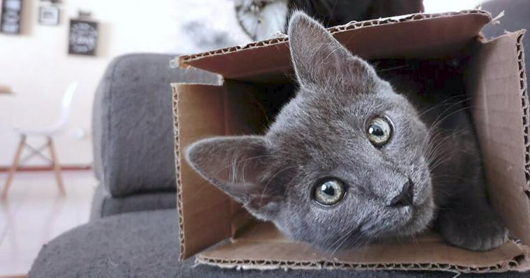 猫が箱に入りたがるのはなぜ? 本能に逆らえない気持ちや猫が好む箱を解説