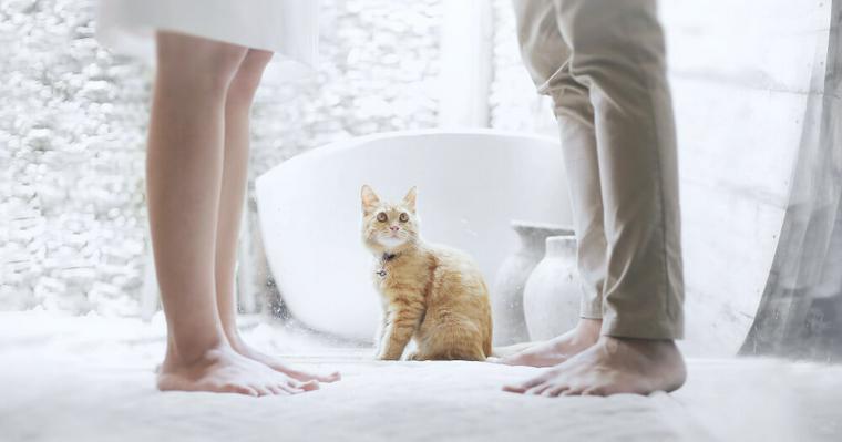 ホワイトデーに猫好き女子に贈りたい! チョコやコスメなどおすすめ猫ギフトを紹介