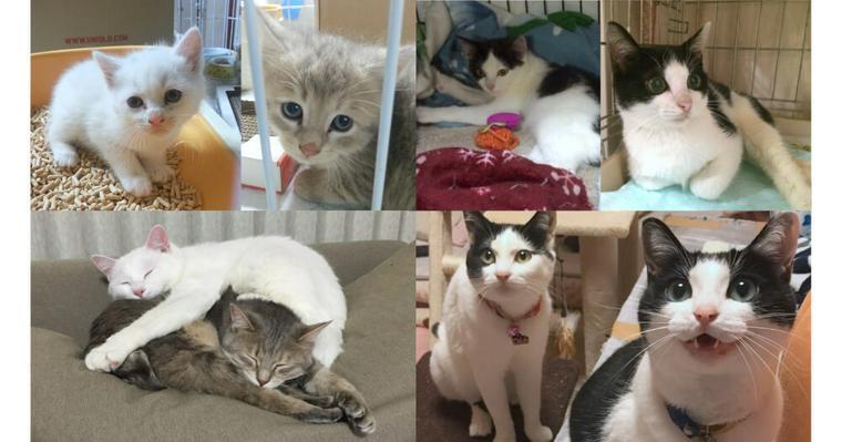 殺処分寸前だった兄妹猫/下半身不随だった姉妹猫 2匹の保護猫を迎えた家族たちの話