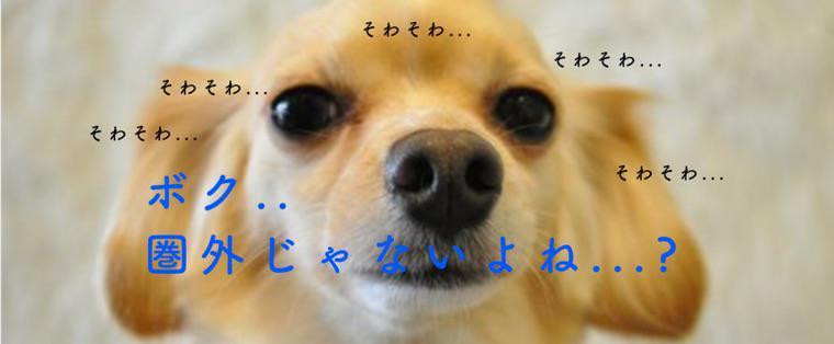 【2018最新版】世界中でフレブル人気? 国内外の人気犬種ランキングを小型犬・中型犬・大型犬別に紹介