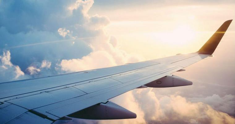 犬と飛行機に乗ることはできる? ケージや犬のストレスについて解説