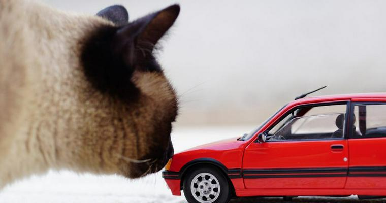 猫は車に乗せても大丈夫? 車酔いや長時間乗せる場合の注意点について解説