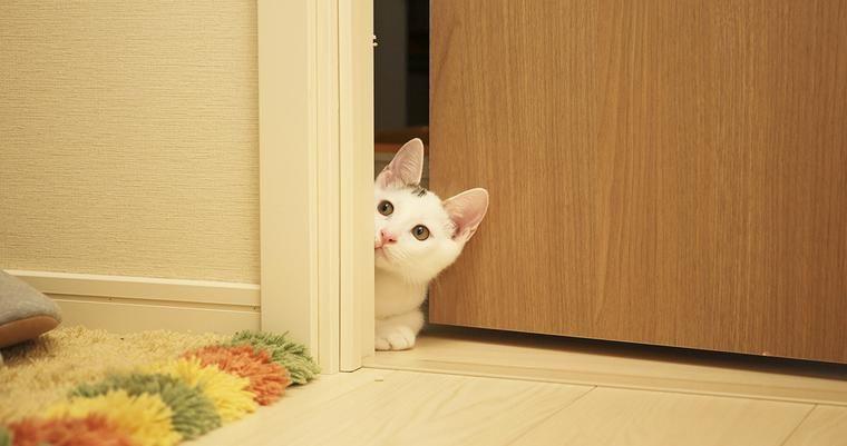 猫専用ドア「キャットドア」をつけるには? 賃貸向けグッズやおすすめのメーカーをご紹介します♪