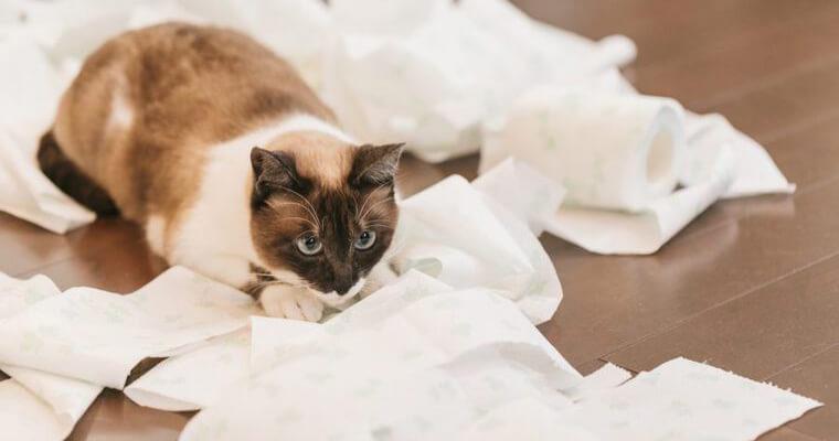 【編集部厳選】猫砂おすすめ10選|トイレに流せるものから飛び散らないものなど紹介