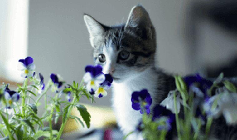 猫は花を食べても大丈夫? 危険な花と安全な花まとめ