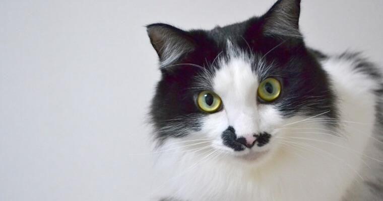 実は危険な猫コロナウイルス(FCoV)|感染症状、検査・治療法など獣医師が解説