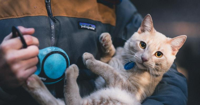 猫にマイクロチップを着ける意味とは? 首輪との違いや費用、注意点を解説