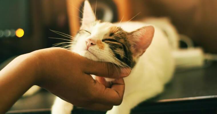 猫用おすすめ消臭剤 置き型、スプレー、ビーズなどバイヤーが紹介します