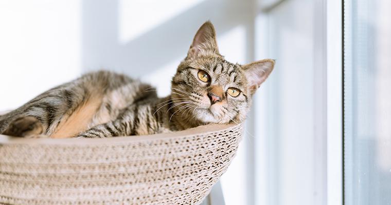 猫のベッドおすすめ12選|おしゃれなものや人気のドームタイプなど