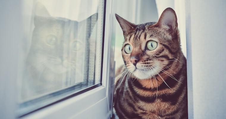 猫の分離不安症とは? 原因や対策などについて行動診療科獣医師が解説