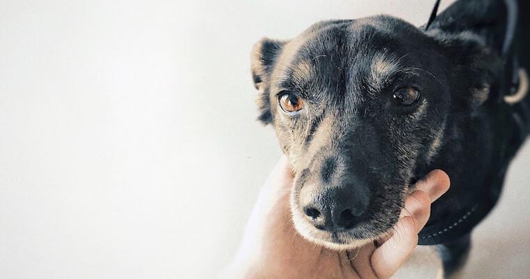 犬の肺水腫とは? 症状や治療法、余命について循環器科担当獣医師が解説