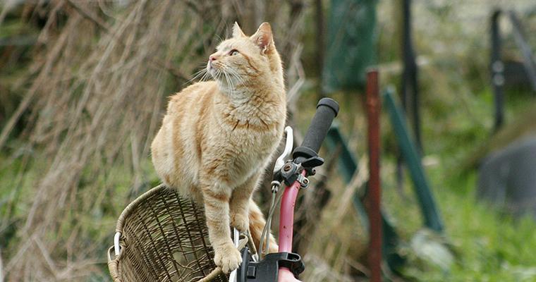 猫は自転車に乗ることができる? かごに乗せる際の注意点やグッズをご紹介