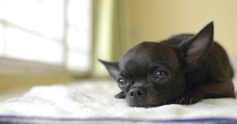 犬のトイレおすすめ7選|囲いがあるものやおしゃれなものなどをご紹介
